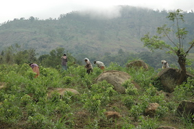 Nourish and care