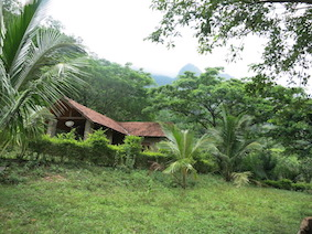Cinnamon procressing center