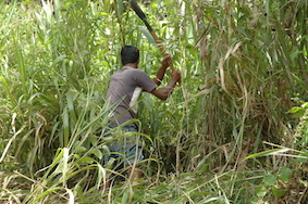 Battle against weeds - without sprays