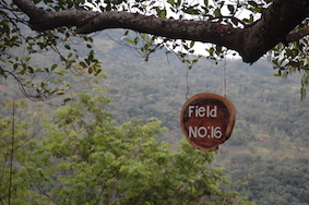Establish structures