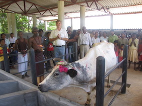 Respect for our animals